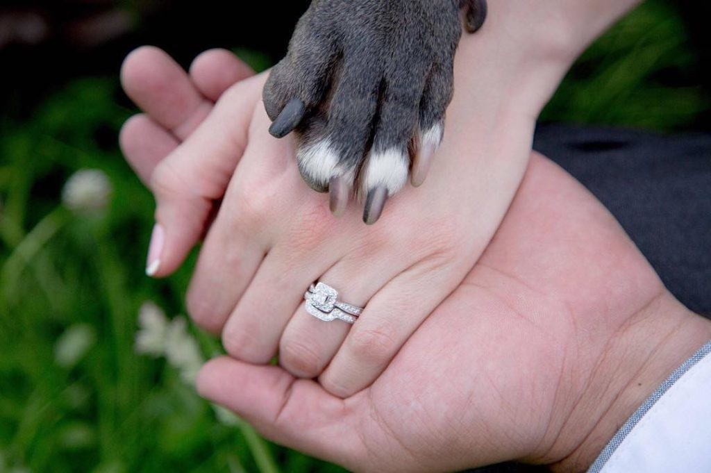 5 ways to include your furbabies on your wedding day