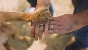The dog ate my wedding ring: things to consider when pet's join the party