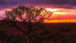 Honeymoon destinations for: Safari