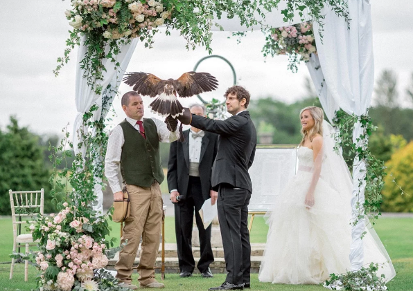 Hawk swoops in as ring bearer