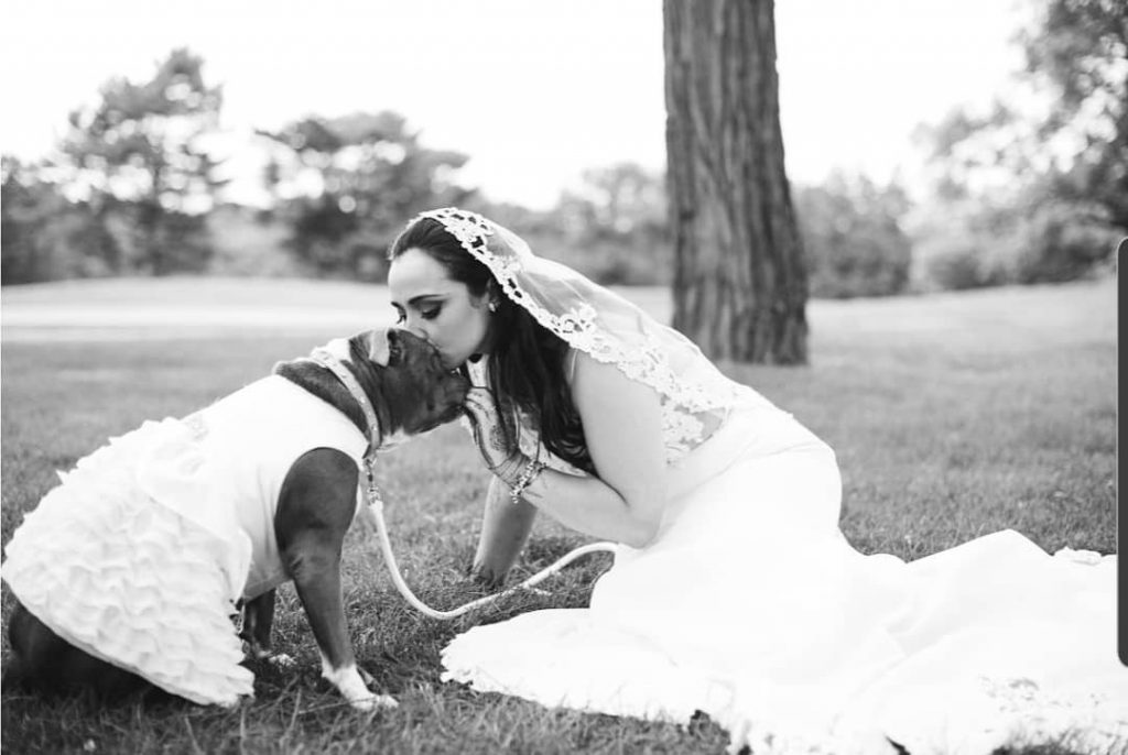 Bride buys pit bull matching wedding dress