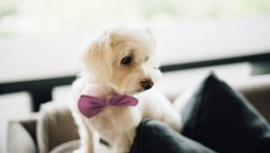 Paw-some ways to involve your pets in your wedding