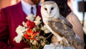 A magical Harry Potter-themed wedding