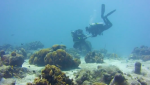 Man surprises girlfriend with underwater proposal