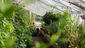 5 reasons you need to wed in a greenhouse