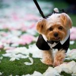 Adorable ring bearers we can't get enough of